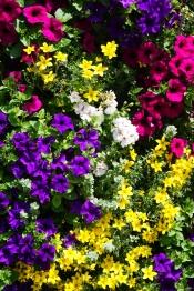 Flowers by Municipal, Prague