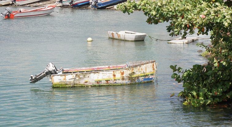 Boat framed by tree